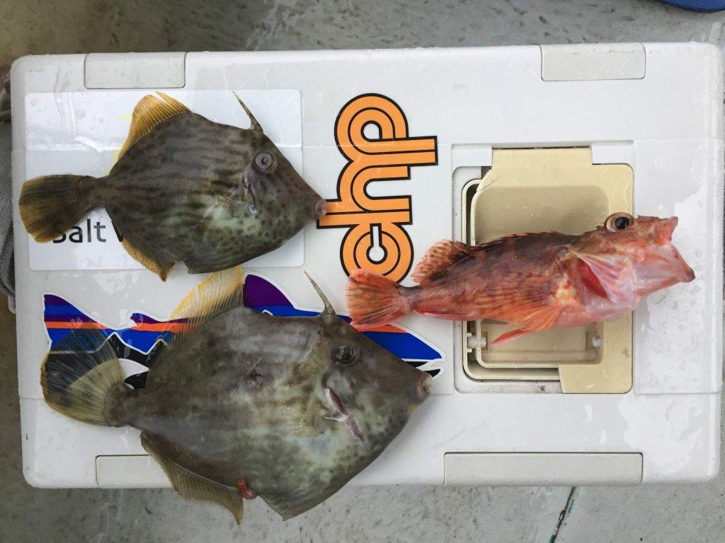 カワハギ釣り,和歌山,加太,三邦丸,船カワハギ,釣果