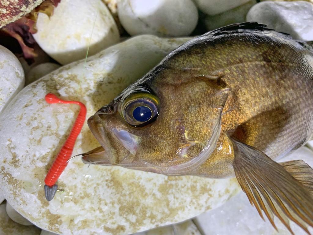 https://j-fishingdiary.com/wp-content/uploads/2019/04/IMG_2225-1-150x150.jpg