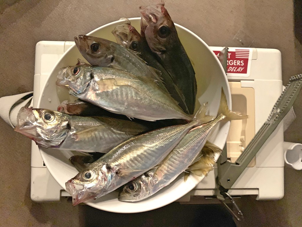 https://j-fishingdiary.com/wp-content/uploads/2019/07/IMG_3759-150x150.jpg