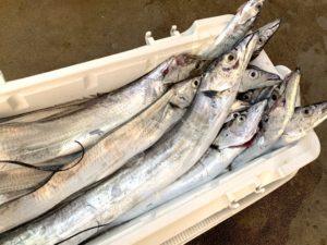 https://j-fishingdiary.com/wp-content/uploads/2019/10/IMG_5579-300x225.jpg