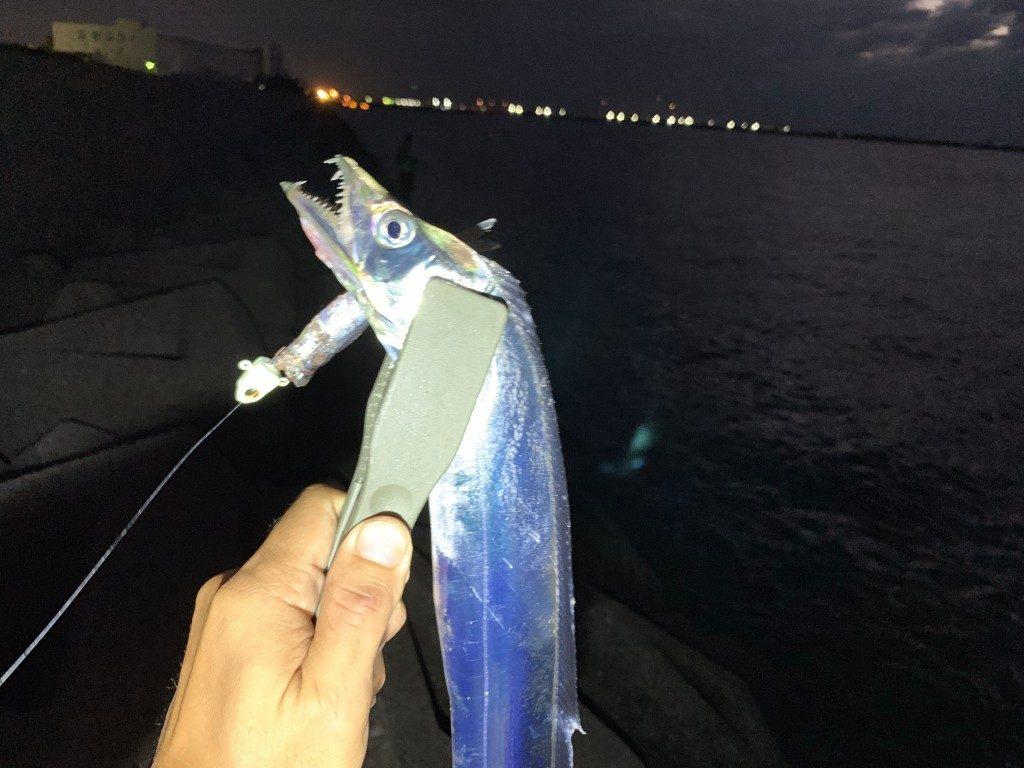 引き釣り,太刀魚,タチウオ,泉大津,釣果