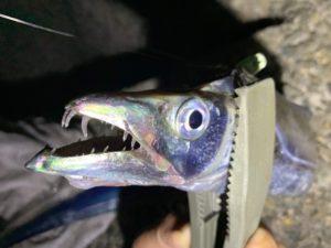 https://j-fishingdiary.com/wp-content/uploads/2019/10/IMG_5597-300x225.jpg