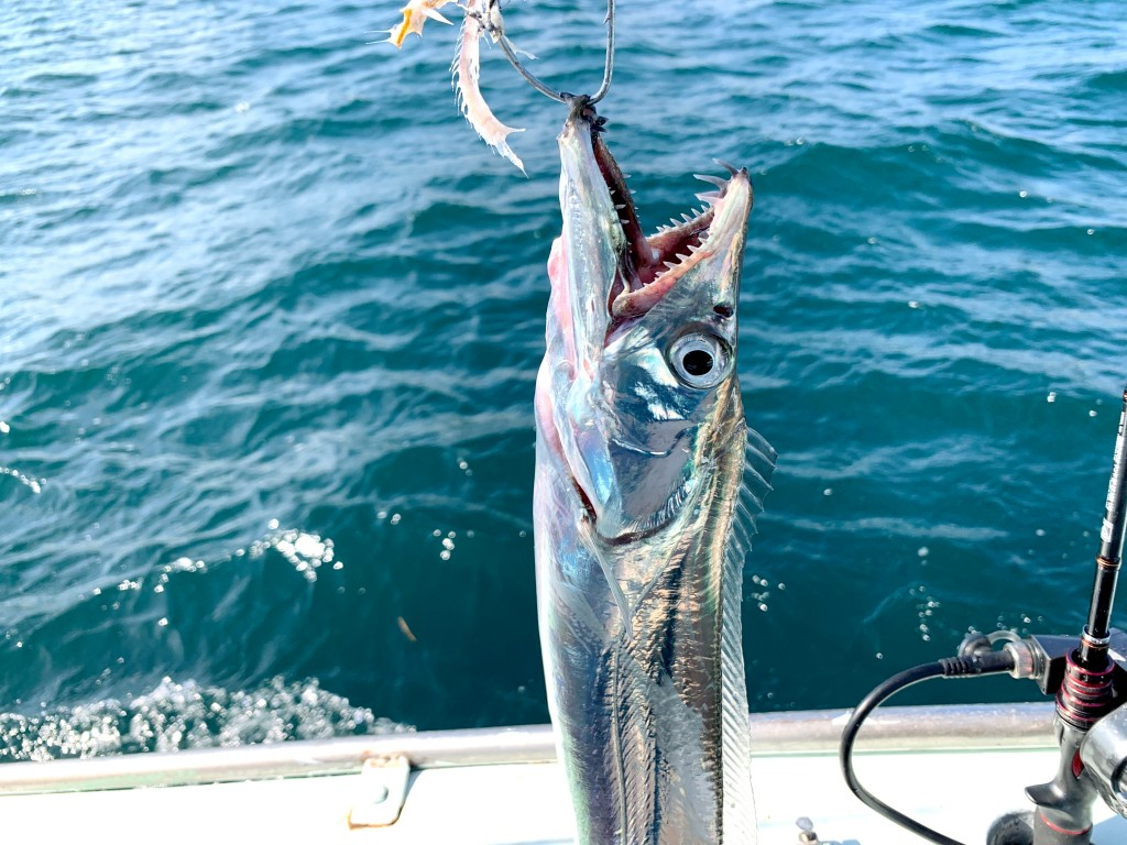 タチウオテンヤ,漁幸丸,釣果