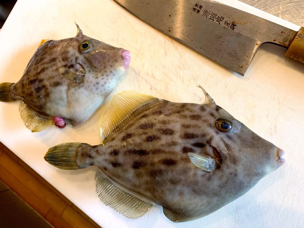 カワハギ釣り,和歌山,加太,三邦丸