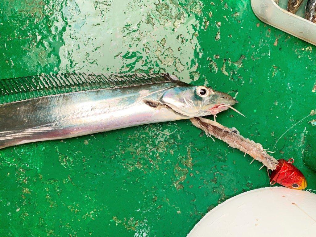 タチウオテンヤ,洲本沖,漁幸丸