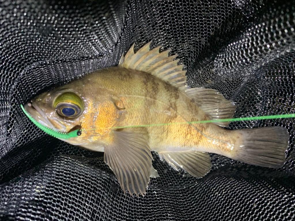 https://j-fishingdiary.com/wp-content/uploads/2020/05/IMG_8497-150x150.jpg