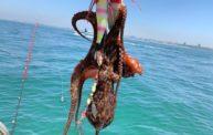 釣って食べればまた行きたくなる!明石の船タコはやっぱり最高です〜【釣行1日目】