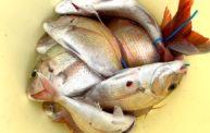 面白くてハマりますよ!!明石の鯛サビキのタックル・仕掛け・釣り方を紹介