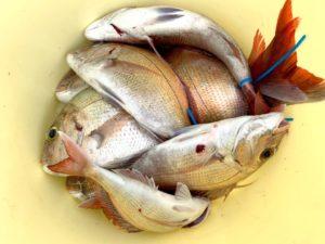 https://j-fishingdiary.com/wp-content/uploads/2020/08/IMG_9644-300x225.jpg