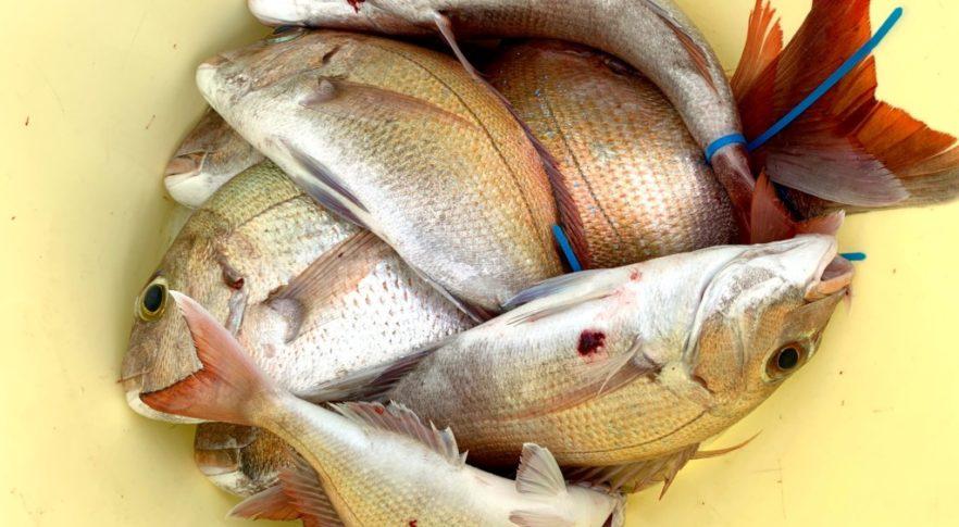 鯛サビキ,タックル,仕掛け,釣り方,明石