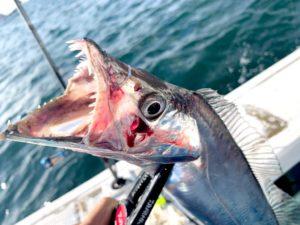 https://j-fishingdiary.com/wp-content/uploads/2020/09/IMG_0512-300x225.jpg