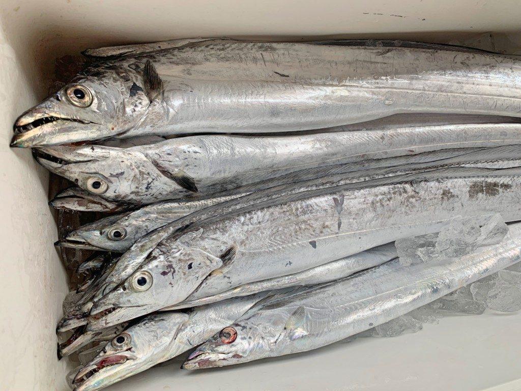 タチウオテンヤ,湊丸,神戸沖