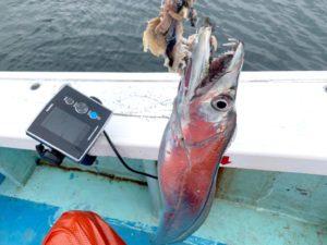 https://j-fishingdiary.com/wp-content/uploads/2020/09/IMG_0731-300x225.jpg