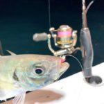 バチコン,アジング,タックルと釣り方紹介,シーホース