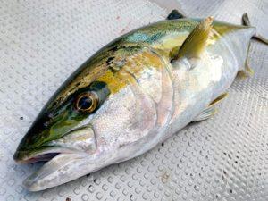 https://j-fishingdiary.com/wp-content/uploads/2021/01/IMG_1652-300x225.jpg