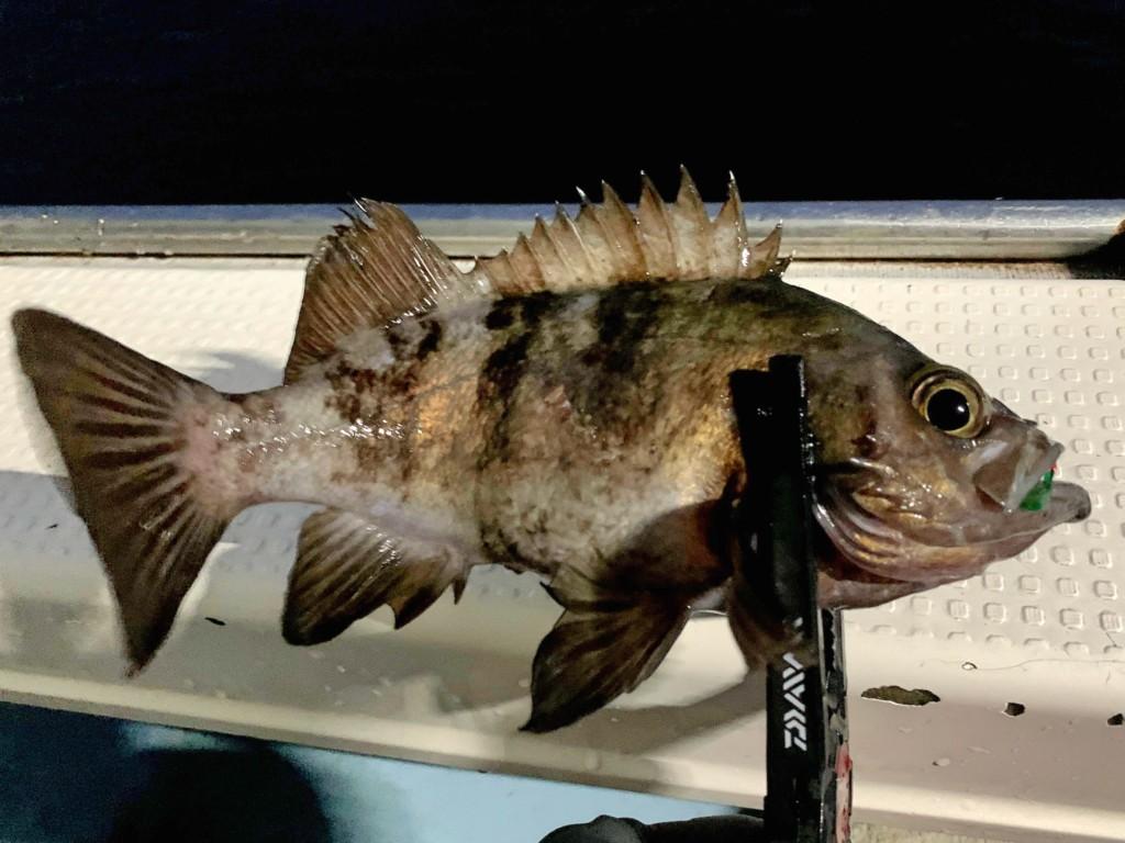 https://j-fishingdiary.com/wp-content/uploads/2021/02/IMG_2445-150x150.jpg