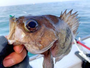 https://j-fishingdiary.com/wp-content/uploads/2021/02/IMG_2471-300x225.jpg