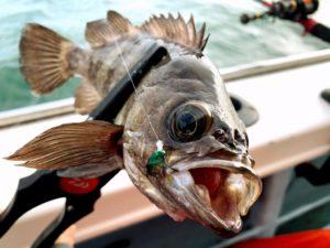 https://j-fishingdiary.com/wp-content/uploads/2021/03/IMG_2729-300x225.jpg