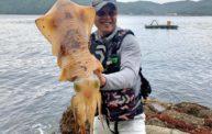 【夢の3kgきたか!?】ヤエンで春のおばけアオリイカを釣ったよ!!