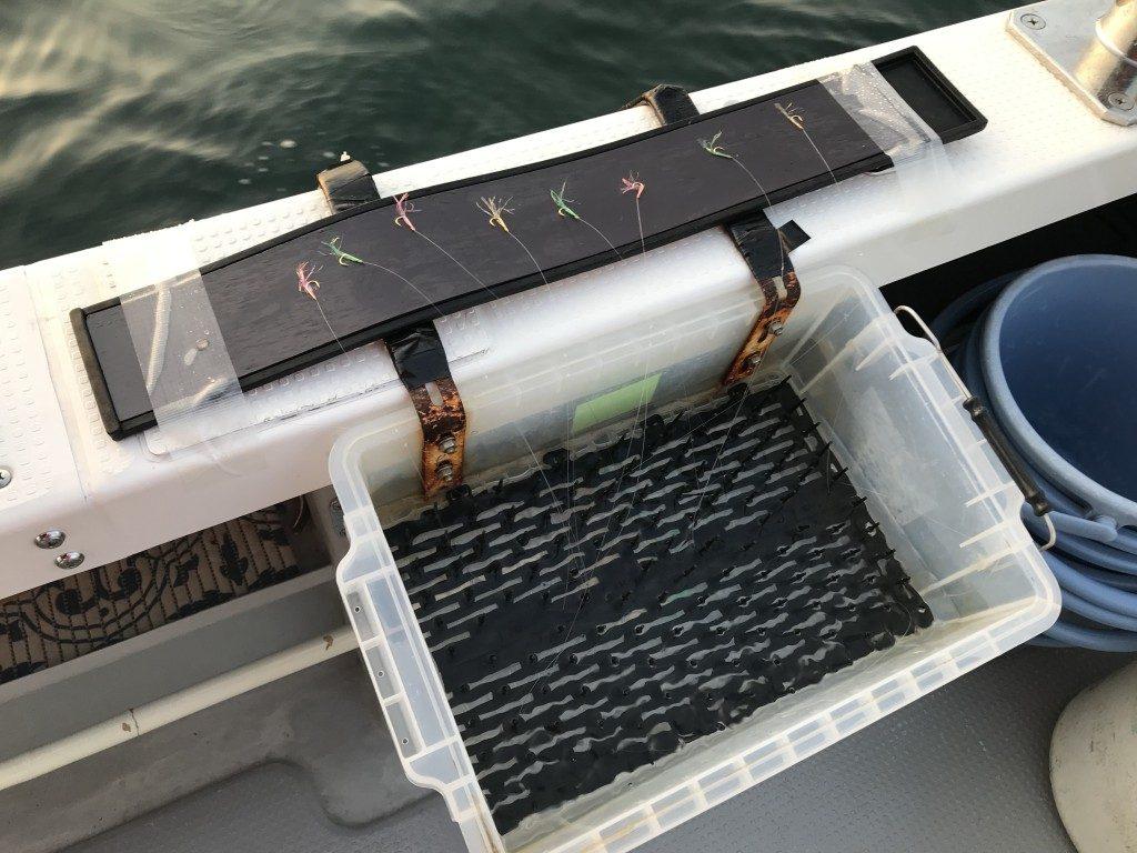 鯛サビキ,仕掛け,タックル,釣り方,明石
