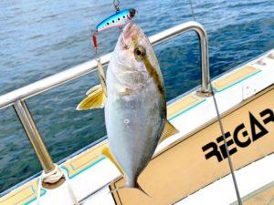 https://j-fishingdiary.com/wp-content/uploads/2021/09/IMG_5006_A-300x225.jpg