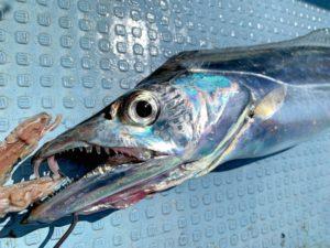 https://j-fishingdiary.com/wp-content/uploads/2021/09/IMG_5065-300x225.jpg